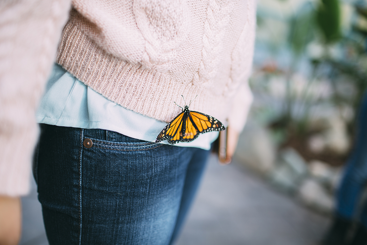 blog-butterfly